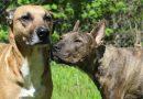 Dog fighting statistics in Kent – 2019