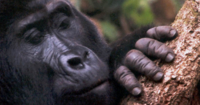 Explained: How you can save the 1m species facing extinction