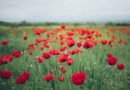 How to celebrate VE Day at home in north Kent