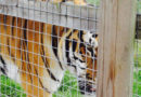 5 things you can do to help zoos at this time