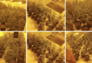 Over 600 cannabis plants seized from house in Ramsgate